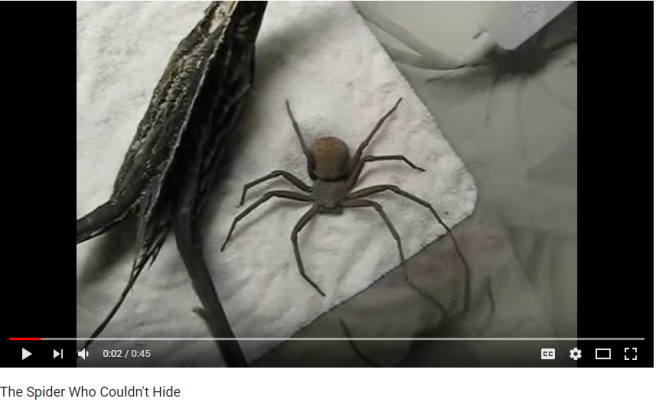 The Spider Who Couldn t Hide YouTube