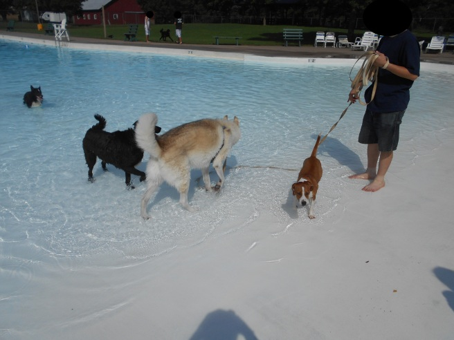 blog puppy paddle 02.jpg