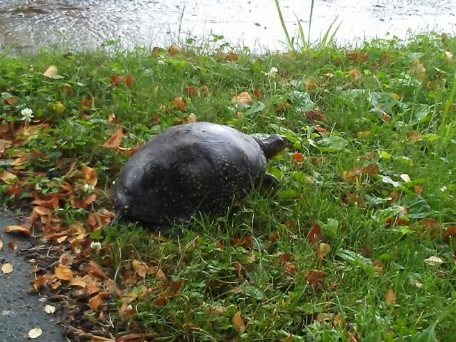 turtle 2020 06 19