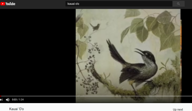 kauai o'o bird song